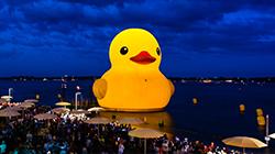 RedPathDuck_RWF_WebsiteGalleryImage_Duck